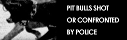 pit-bulls-shot-by-police